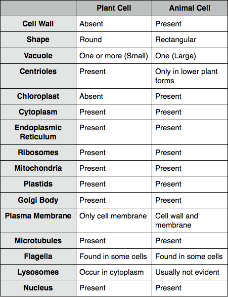 Plant And Animal Cells Blog  Week 2